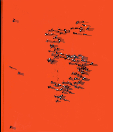 documenta5 1